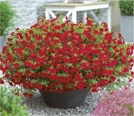 Million Bells® Bouquet Red