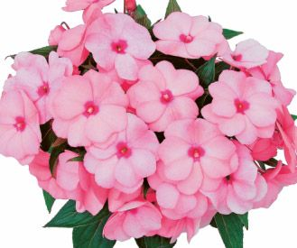PAC Impacio Soft Pink™